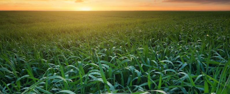 De onde vem o que eu como: veja 5 pesquisas agropecuárias que mudaram o consumo e a qualidade de vida dos brasileiros