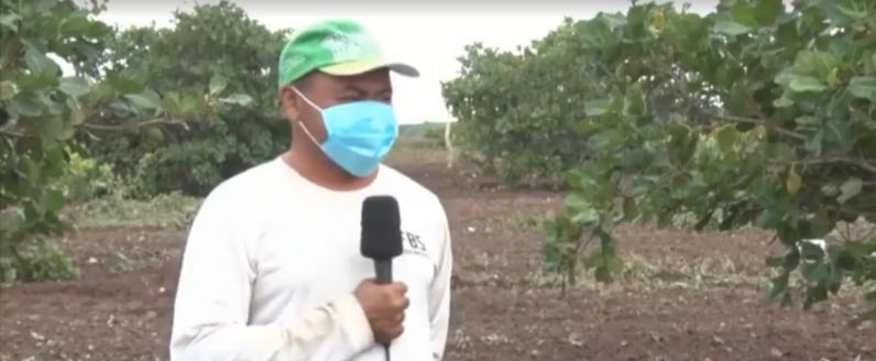 [VÍDEO] IBGE estima aumento de 25 mil toneladas na produção de castanha de caju no Piauí